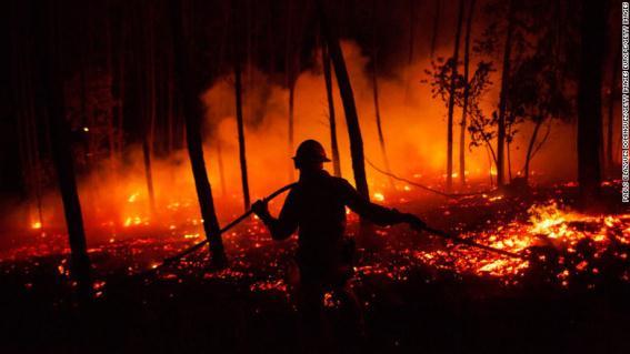 Problema Ambiental de los Incendios Forestales