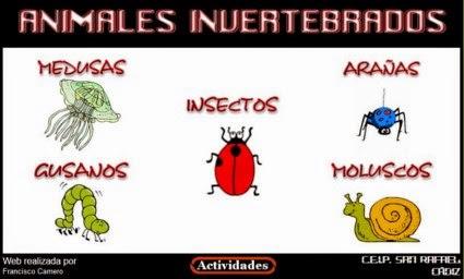 http://www.juntadeandalucia.es/averroes/ceip_san_rafael/INVERTEBRADOS/index.htm