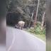 un elefante se echa encima de un auto lleno de turistas