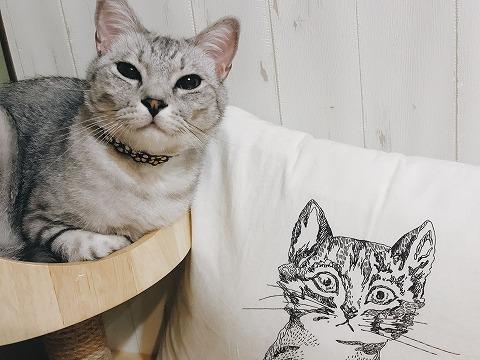 クッションの猫とリアル猫
