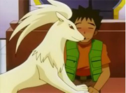 Ninetales y Brock