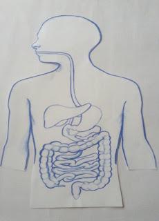 maqueta del sistema digestivo con material reciclable