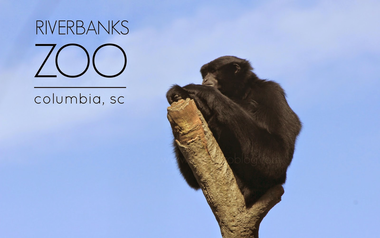 riverbanks zoo, columbia sc