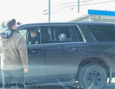 """Foto de perro """"arrestado"""" por la policía se hace viral"""