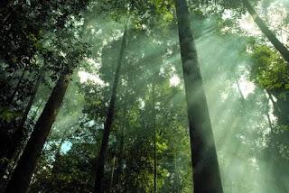Hutan Terbesar