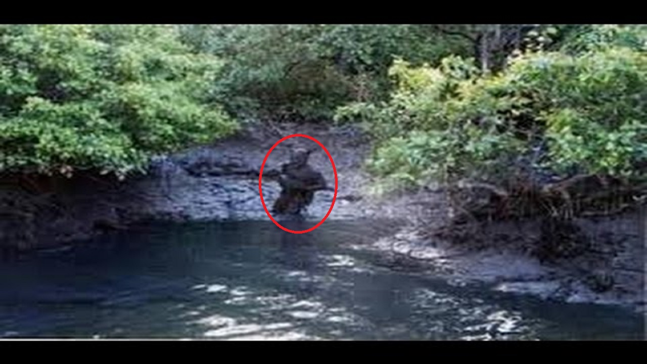 Dogman Stalks Two Louisiana Fisherman