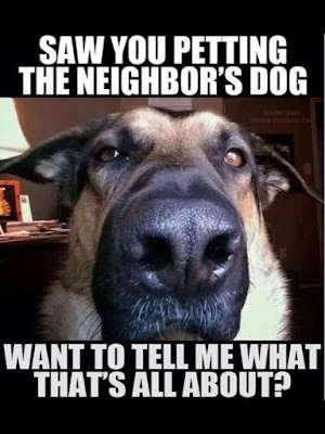 Funny dog pictures : I saw you next door with the dog