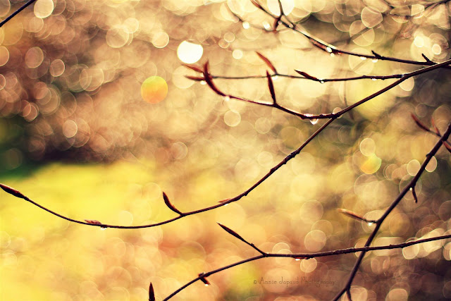 golden bokeh background and raindrops on branches