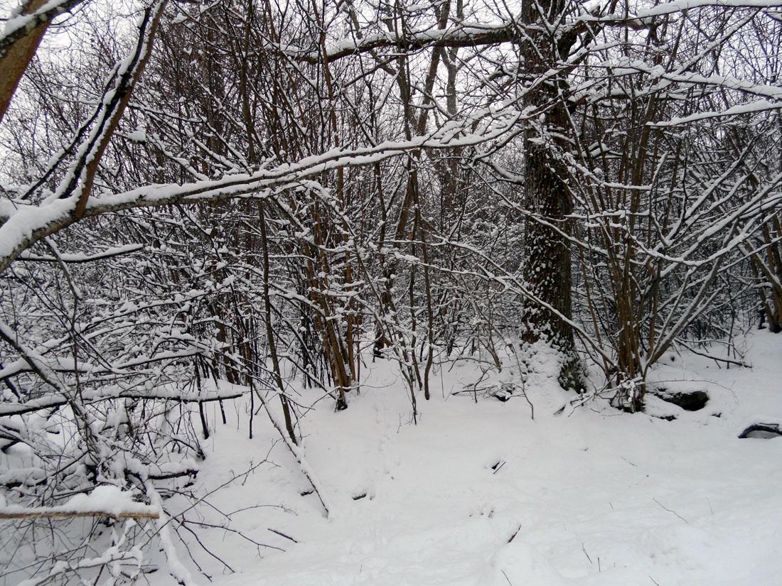 In bosco di frassini
