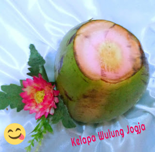 bibit kelapa hijau wulung jogja