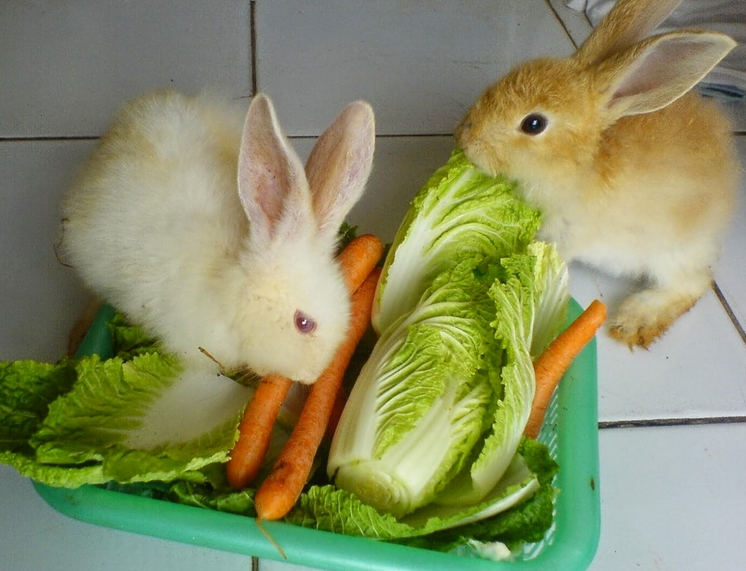 93+ Gambar Gambar Kelinci Dan Makanannya Inspiratif
