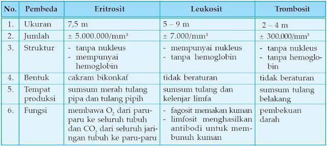 Perbedaan Sel Darah Merah (Eritrosit), Sel Darah Putih (Leukosit) dan Keping Darah (Trombosit)