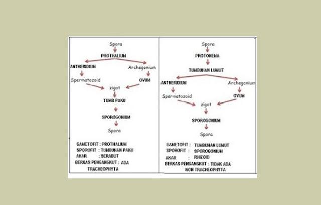 Metagenesis Tumbuhan