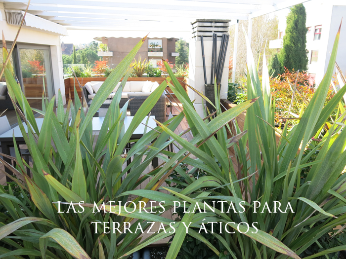 Las 6 mejores plantas de sol para terrazas y ticos - Plantas para macetas exterior resistentes ...