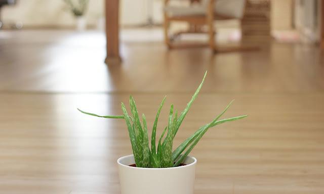 6 pilihan tanaman hias terbaik untuk meja kantor