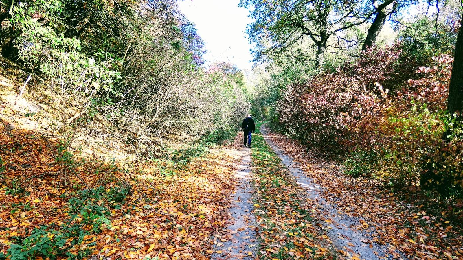Jesień w Siadle Dolnym