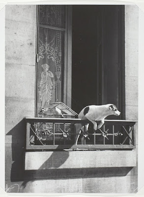 Companion Animal Psychology News: Animals in Art photo of a dog peering over a balcony in Paris