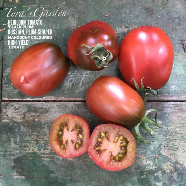 Russian Black Plum Tomato