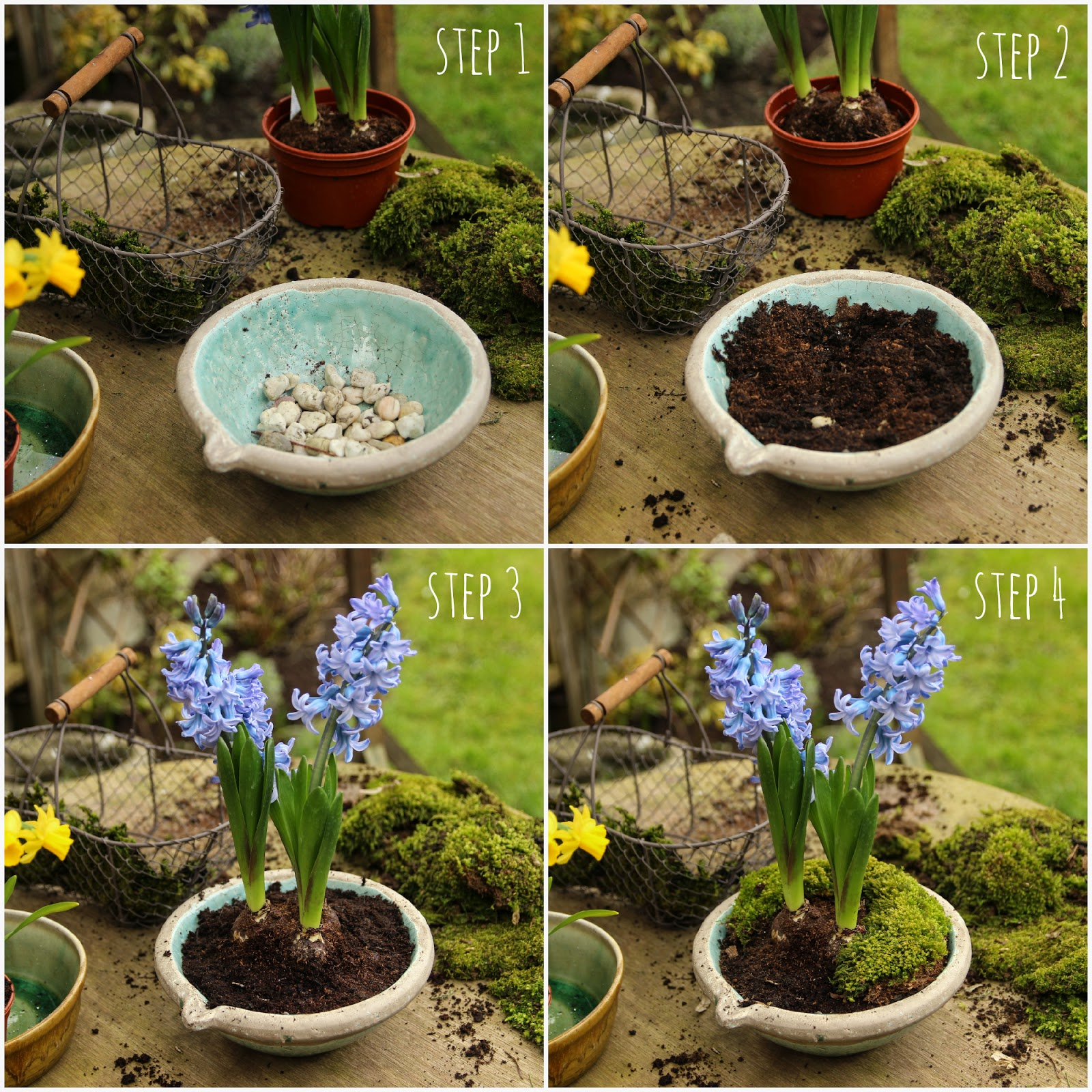 Step by step easter Hyacinths flower display
