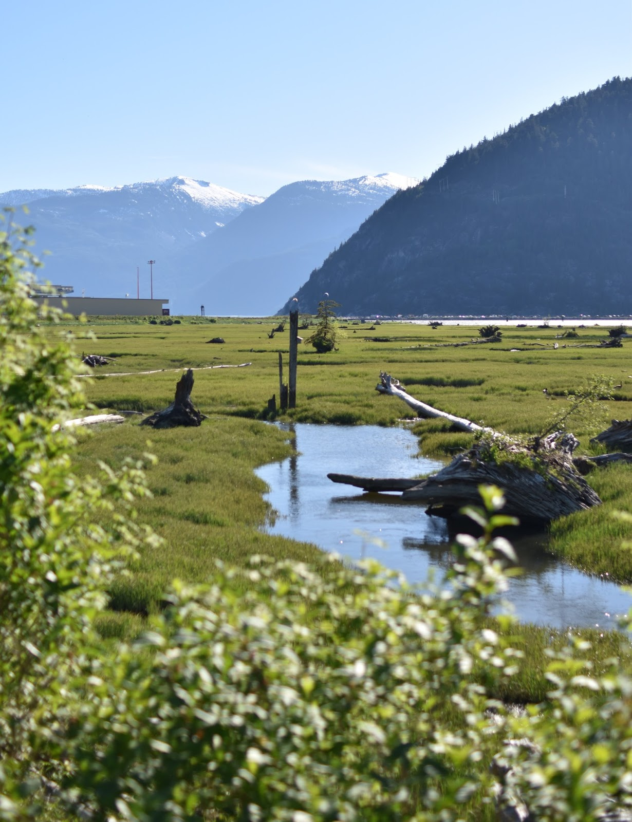 Estuary, Squamish BC