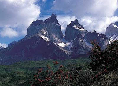 Chinchilla Andes
