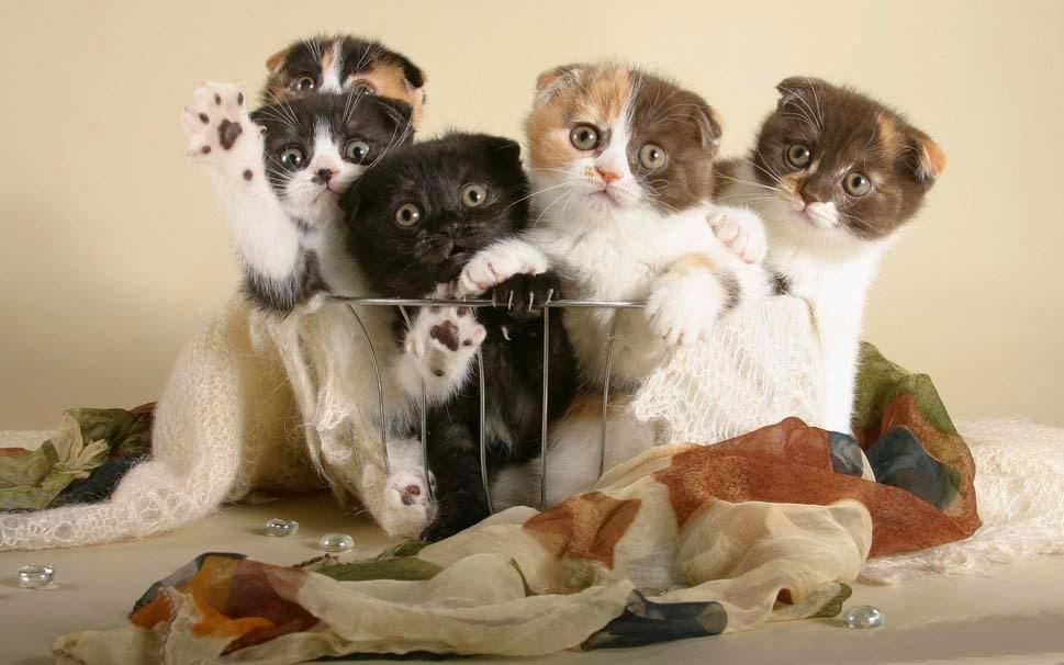 lucu-kucing-dalam-keranjang