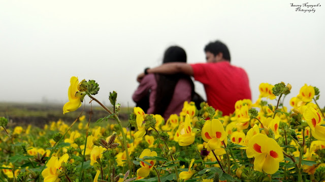 Kaas Plateau - Valley of Flowers