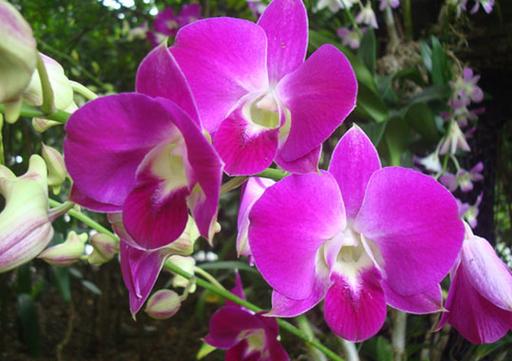Bunga Anggrek dan Manfaatnya Semua Tentang Bunga