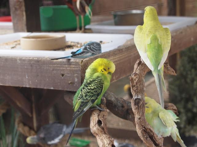 Godstone Farm, Surrey Review - birds
