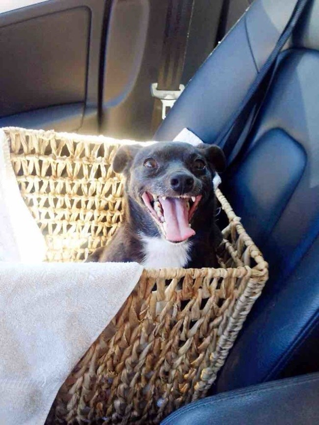 Fofura do dia: A reação desses cães após a adoção vai te emocionar blog fala berenice