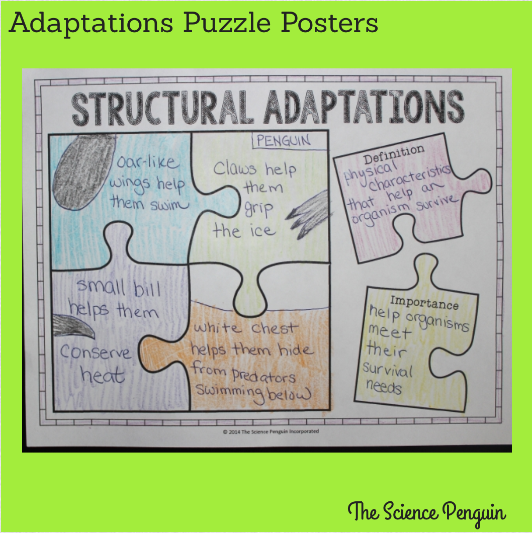 Time To Teach Animal Adaptations