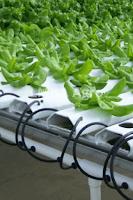pertanian,budidaya tanaman,hidroponik,benih tanaman,lmga agro