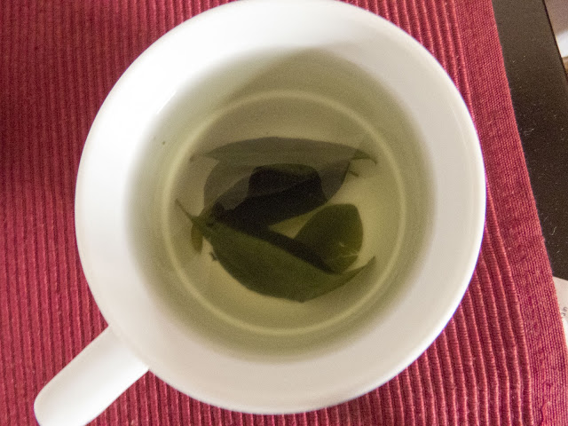 Coca tea steeped from fresh leaves