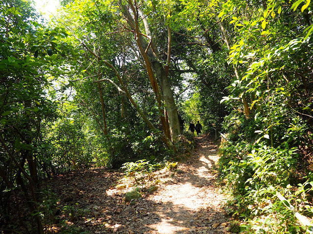 Forest path on Tai Long Wan hiking trail, Hong Kong