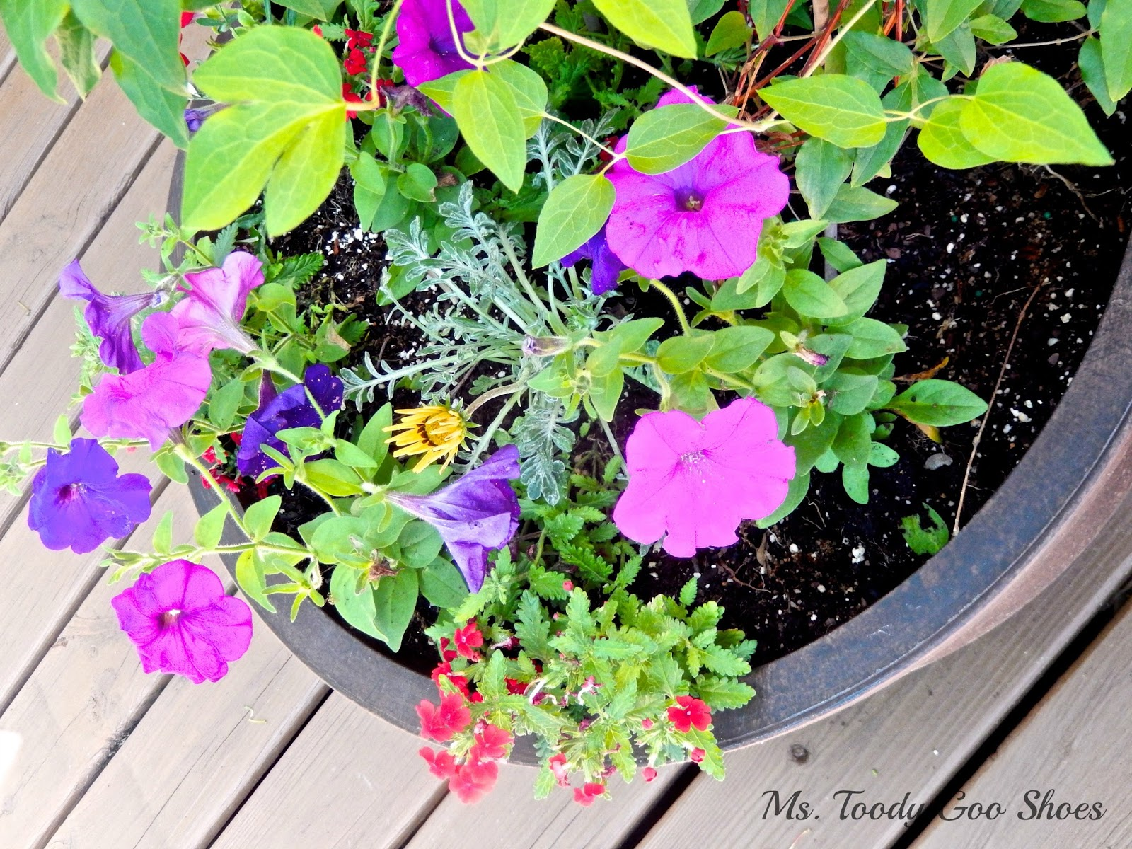 Summer Flower Pots --- Ms. Toody Goo Shoes
