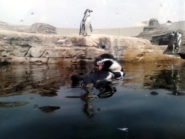 Oceanarium w Stralsundzie