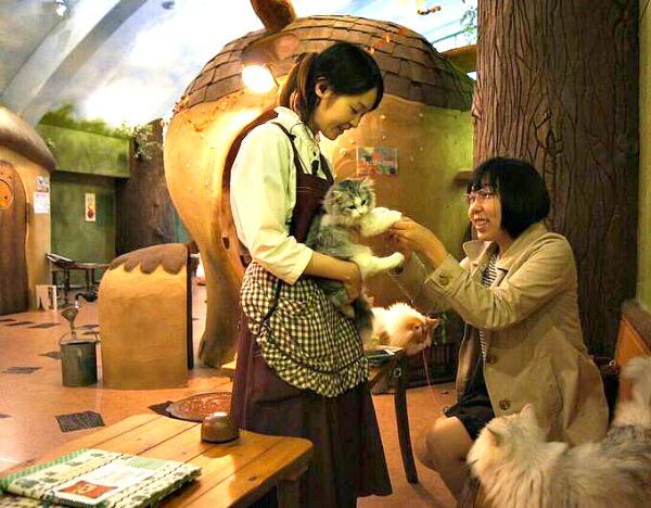 tokyo japan cat cafe temarinoouchi