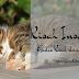 Kisah Inspiratif: Gadis Kecil dan Kucing