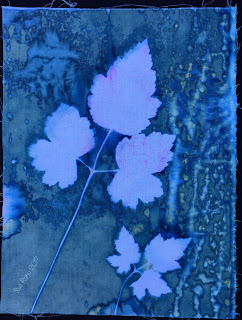 Wet cyanotype, Sue Reno, Image 14