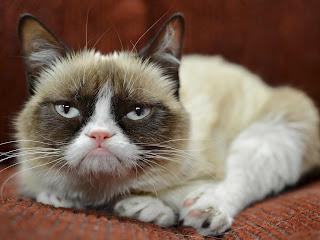 gambar kucing Grumpy