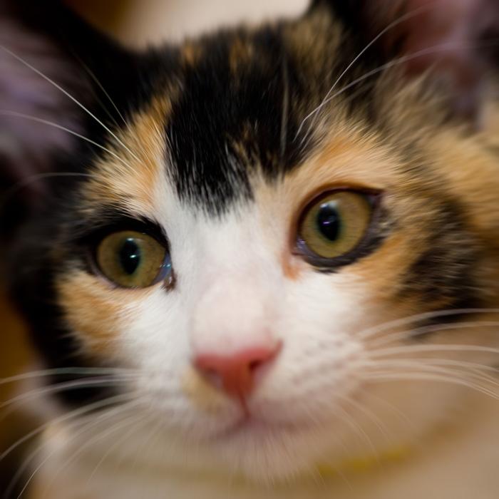 驚き目を見開く猫