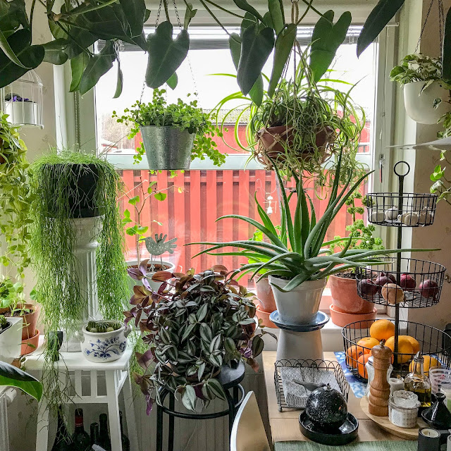 köksfönster, kitchenwindow, växtgardin