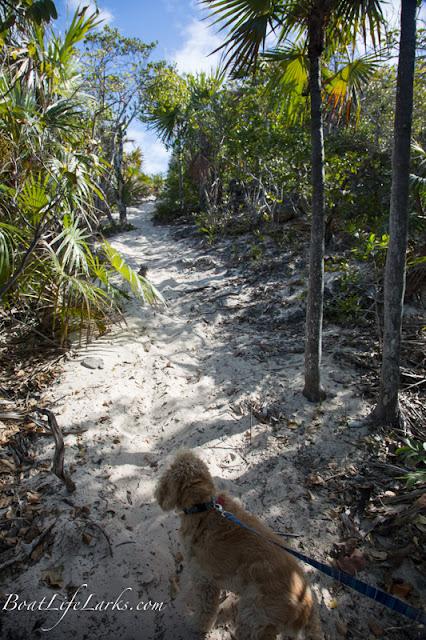 Trail on Stocking Island