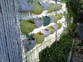Huerto vertical aprovechando una valla y unas bolsas de cultivo