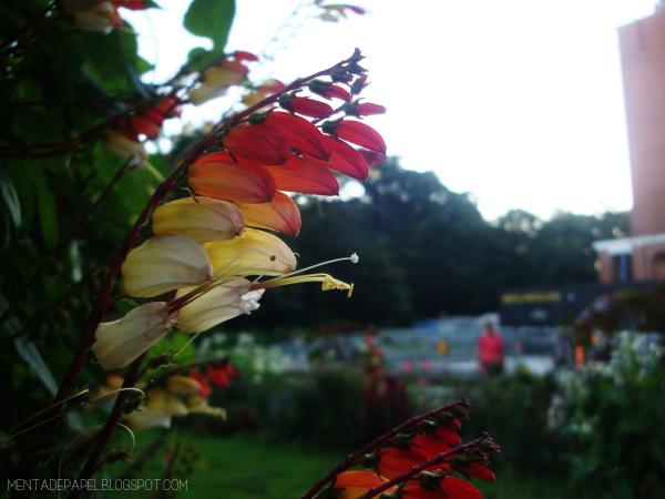 Flor en degradé en el Stadtpark de Hamburg