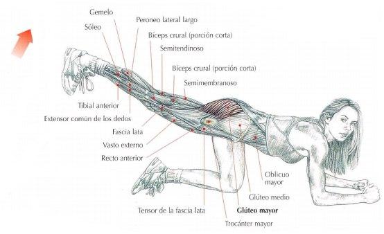 Extensión de la cadera - Patadas de glúteos en el suelo | Rane Forti
