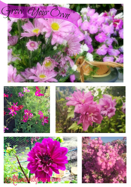 purple cosmos, dahlia, asters,  gardening