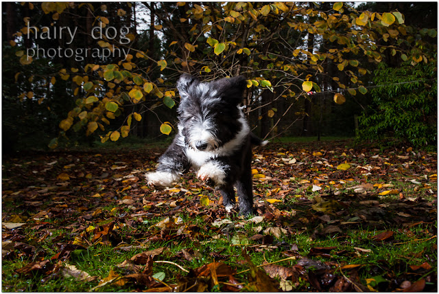 hairy dog photography gift vouchers north east thorp perrow arboretum