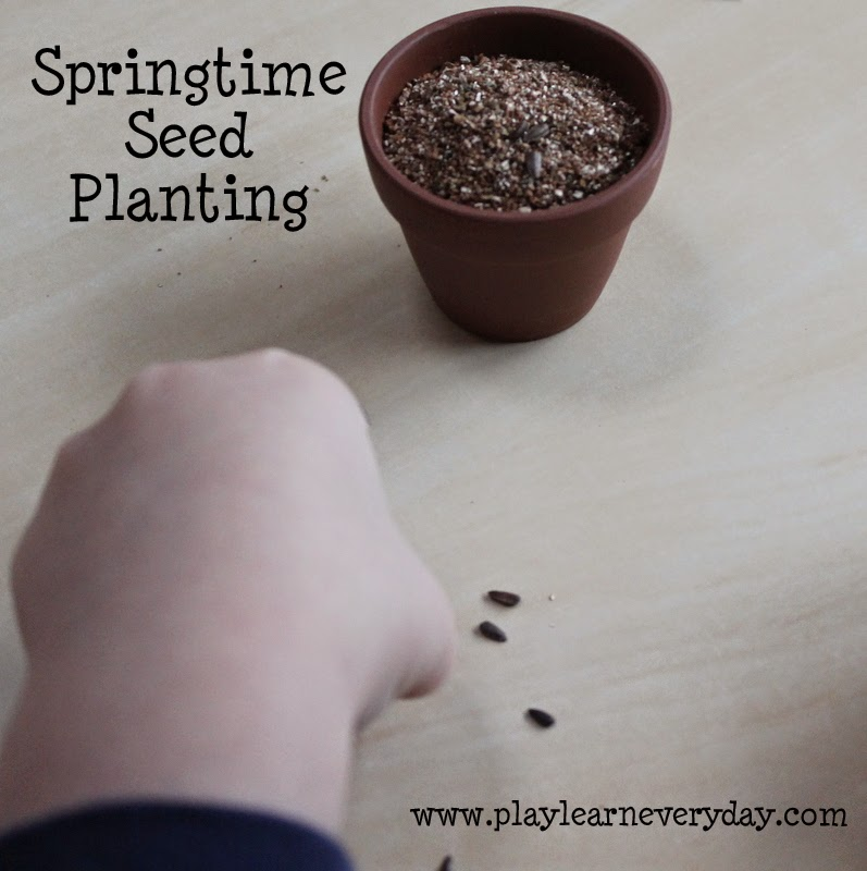 Planting seeds in dirt in a flower pot with kids.
