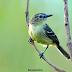 Área urbana de Palmas detém cerca de 55% das espécies de aves do Tocantins